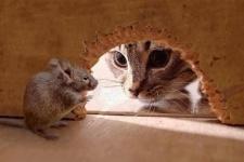 В павлодарском детсаду котов насильно заставляли ловить грызунов