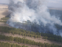Пожар на площади в 300 гектаров разгорелся в сосновом бору Павлодарской области