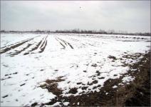 Тысячи гектаров плодородных земель простаивают в Павлодарской области