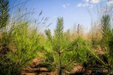 В Павлодаре определили места для озеленения внутриквартальных территорий