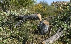 В Аксу вырубили сотню деревьев, чтобы построить вело-роллерную трассу