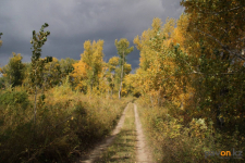 Жителей Павлодарской области приглашают на высадку леса