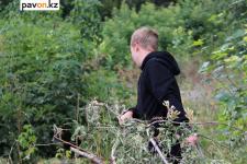 Павлодарцев просят согласовывать обрезку деревьев с соседями