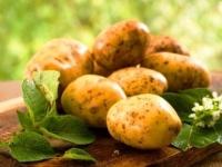 Аграрии Павлодарской области собрали свыше 400 тыс тонн картофеля