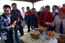 Знаменитые лебяжинские арбузы поступят на прилавки павлодарских магазинов к середине августа
