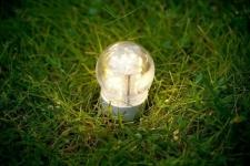 Молодые ученые Павлодара изучают, как получать электричество из травы