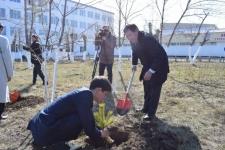 Свыше тысячи саженцев высадили в Экибастузе в честь юбилея Каныша Сатпаева