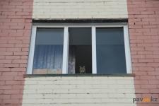 Кошкам нужны окошки: зоозащитники ищут возможность отремонтировать здание для центра помощи бездомным животным
