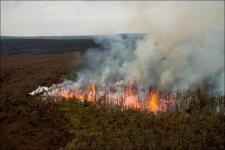 Леса в этом году горят реже