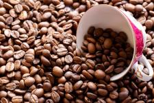 В экологической школе Павлодара собрали урожай кофе