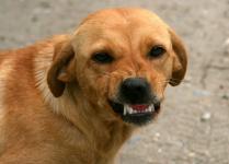 В Павлодарской области 30 тысяч тенге заплатил хозяин пса, который укусил подростка