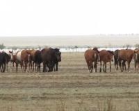 На действия земельщиков пожаловались предприниматели Майского района