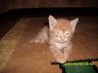 Отдам рыжего котенка 3месяца.