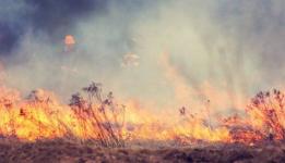 Аким Павлодарской области предлагает лишать поджигателей сухостоя их сельхозугодий