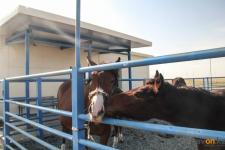 В трех селах Прииртышья открыли ветеринарные пункты нового образца