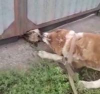 Экибастузца, натравившего свою собаку на чужую, привлекли к ответственности