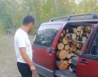 В Павлодарской области лесокрады пытались вывезти машину дров