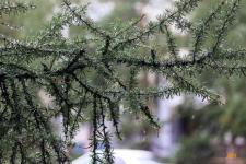В Павлодаре ожидаются грозы и усиление ветра