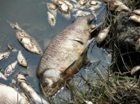 Мертвой рыбой оказался усеян берег еще одного водоема в Павлодарской области