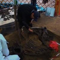 Лето с целой серии уникальнейших находок начали павлодарские палеонтологи