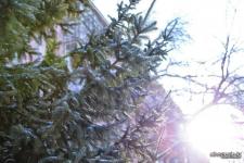 В Павлодаре четыре человека официально зарегистрировались как продавцы новогодних елок