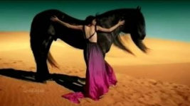 flamenco, gipsy kings