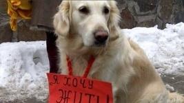 Все собаки попадают в рай. Или обычный телефонный звонок продлевает лицензию на убийство