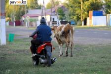 В Кызылординскую область поедет за переселенцами аким Успенского района