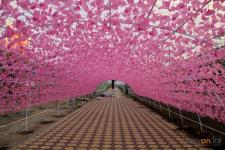 На улице Кутузова в Павлодаре заканчивают монтаж цветочной арки