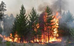 Начальник пожарной части напомнил о горении леса в Баянауле, которое тушили два месяца