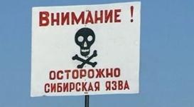 Что нужно знать о сибирской язве и как от нее защититься