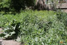 Ануар Кумпекеев попросил павлодарцев уделить внимание благоустройству дворов перед Днем города