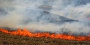 В Карагандинской области во время степного пожара заживо сгорели 380 коров и лошадей