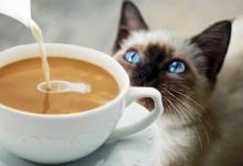 Кафе для кошек планируют запустить павлодарские школьники