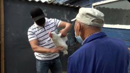 500 тысяч голов планируют привить от птичьего гриппа в Павлодарской области