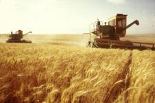 Хлеборобы ожидают рекордный урожай