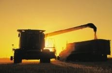 Египет планирует возобновить импорт пшеницы из Казахстана