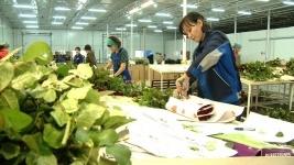 Экибастузские розы завоевывают российский рынок