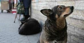 Создание в Павлодаре приюта для бездомных животных
