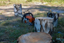 Мораторий на вырубку деревьев просят объявить экологи в Павлодаре