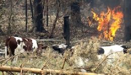 В Хакасии сгорели 4 тысячи голов скота