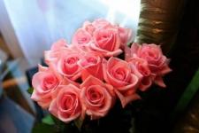 Экибастузские розы появятся в продаже накануне 8 марта