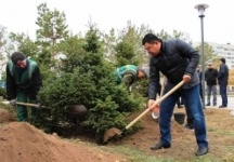 Свыше тысячи деревьев было посажено на общегородском субботнике в Павлодаре