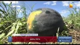 Медики призывают тщательно выбирать сезонные овощи и фрукты