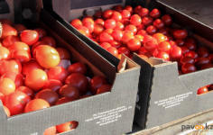 Спонсорскую помощь помидорами получили подопечные соцучреждений Павлодара