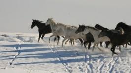 Казахстанские пограничники задержали контрабандистов на границе с Кыргызстаном