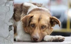 Когда залают радостно собаки?