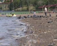На территории Павлодара стремительно поднимается уровень Иртыша