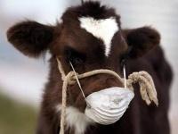 Сельчане Прииртышья пасут скот на территории скотомогильников