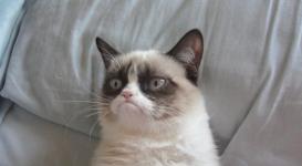 """""""Сердитый"""" кот помог своей хозяйке заработать почти 100 миллионов долларов"""